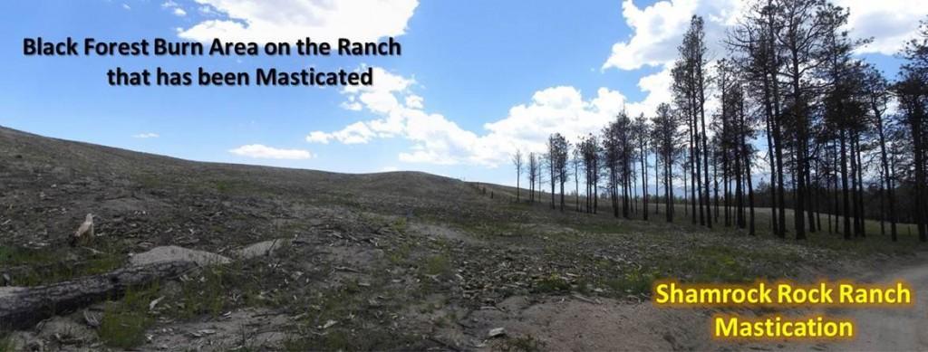 Shamrock Ranch 4